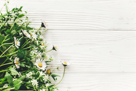 hello spring image. beautiful little white flowers with greenery on rustic white wooden background top view. space for text. greeting card. earth day. happy mothers woman day. eco