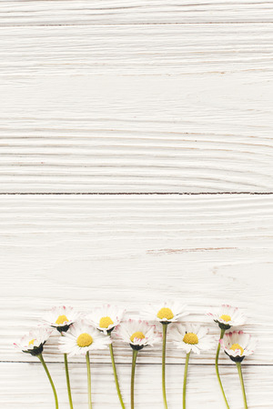 hello spring flat lay. beautiful daisy flowers on rustic white wooden background top view. space for text. stylish fresh image. greeting card. earth day. happy mothers woman day Archivio Fotografico