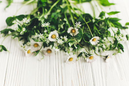 hello spring image. beautiful daisy flowers with greenery on rustic white wooden background top view. space for text. greeting card. earth day. happy mothers woman day. eco