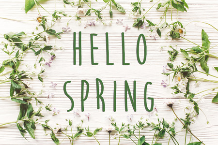 hello spring text sign on fresh daisy lilac flowers and green herbs frame on white wooden rustic background top view. happy earth day. spring flat lay. greeting card. Stockfoto