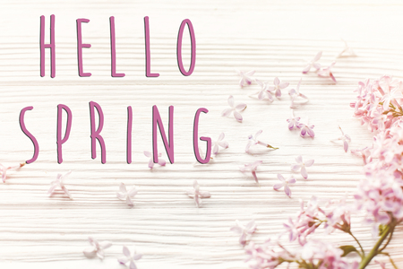 hello spring text sign on spring image. beautiful tender lilac flowers and petals in light on white wooden rustic background top view. happy earth day. greeting card.