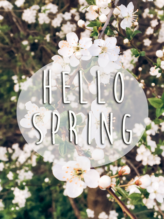 hello spring text sign on beautiful blooming blossoms in sunset light in evening park. tender cherry flowers on branches in springtime in sun rays Standard-Bild
