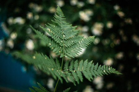 beautiful green fern leaf in focus. fern leaves in forest, close-up. space for text. wild nature . eco concept