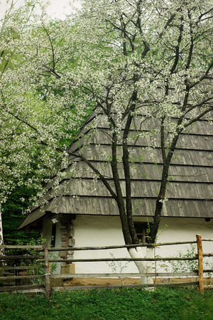 old wooden ukrainian house with clay walls and straw roof in summer garden