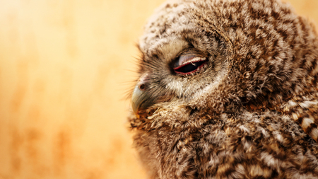 cute sweet owl with grey and brown feathers with funny look, space for text