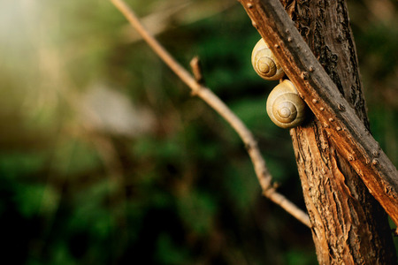 two cute snails on branch in sunny evening on green background