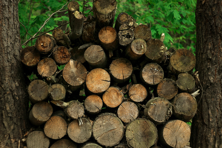 stacked pile of old firewoods on background of trees in forest