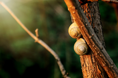 two cute snails on branch in sunny evening on green background Reklamní fotografie - 99184447