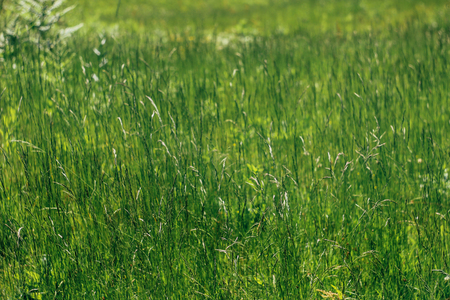 amazing beautiful green grass in sunny woodland in summer mountains Stock Photo