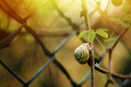 cute little snail sitting on branch under leaf in sunlight in botanical garden Reklamní fotografie - 99343659