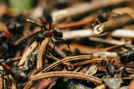 山の森の中の巣で一生懸命働く茶色のアリの群れ