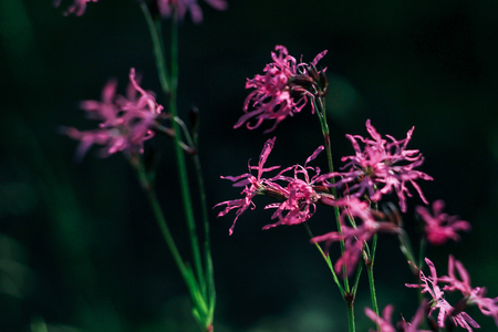 beautiful amazing pink flowers on background of sunny grass in summer woods