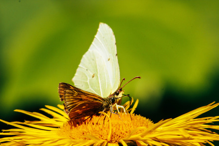 beautiful gorgeous colorful butterfly on yellow flower in sunny outdoors Archivio Fotografico - 99935760