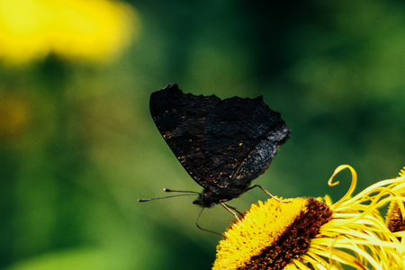 beautiful gorgeous colorful butterfly on yellow flower in sunny outdoors