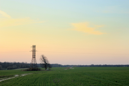 power line tower and tree on the background of  sunset and meadow in springtime Archivio Fotografico - 100659433
