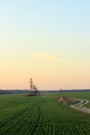 power line tower and tree on the background of  sunset and meadow in springtime