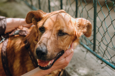 people hands caress brown old dog in city street, sweet emotions. person hugging scared sweet doggy with sad eyes. homeless dog looking for home. adoption concept Stock Photo
