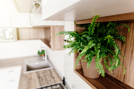 green fern plant ion shelf. Kitchen design in modern scandinavian style. stylish light grey kitchen interior with modern furniture and stainless steel appliances in a new house.