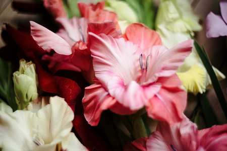 beautiful stylish bouquet of colorful gladioli on wooden rustic background