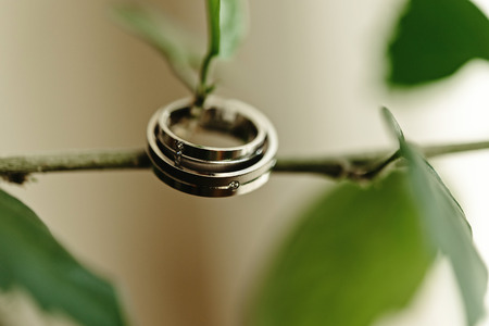 luxury gorgeous wedding rings with diamonds on beautiful green plant Stock Photo