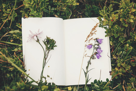 beautiful bellflower and wildflowers on paper notebook on blueberries bushes on sunny hills of mountains, top view. hipster gathering wildflowers and herbs for herbarium