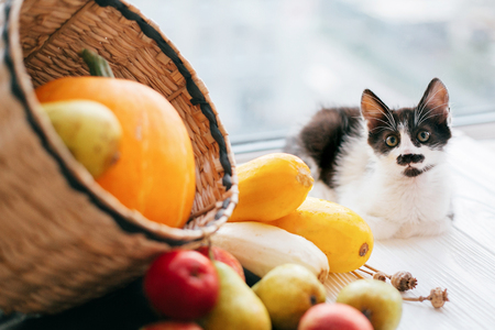 Adorable kitty sitting at pumpkin ,zucchini, apples and pears in straw basket in light on wooden background. harvest and hello autumn concept with space for text. Happy Thanksgiving