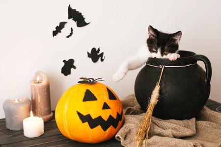 lindo gatito jugando en caldero de brujas con calabaza Jack o lantern con velas, escoba y murciélagos, fantasmas sobre fondo espeluznante. Feliz concepto de Halloween. imagen atmosférica