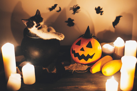 Happy Halloween. black kitty sitting in witch cauldron and Jack o lantern pumpkin with candles, broom and bats, ghosts on background in dark spooky room. atmospheric image Stock Photo