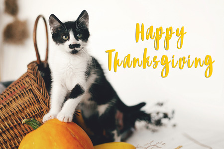 Happy Thanksgiving text, seasons greeting card. Thanksgiving sign. Cute kitty, pumpkin, wicker basket on wooden background. Cat and autumn vegetables Stock Photo