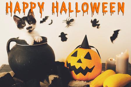 Glückliches Halloween-Textkonzept. Jahreszeitengruß, gruseliges Halloween-Zeichen. Nettes Kätzchen im Hexenkessel mit Jack o Laterne, Kürbis, Kerzen, Besen und Fledermäusen, Geister auf Hintergrund Standard-Bild