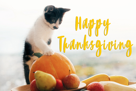 Happy Thanksgiving text, seasons greeting card. Thanksgiving sign. Cute kitty, pumpkin, wicker basket on wooden background. Cat and autumn vegetables Foto de archivo - 107019547