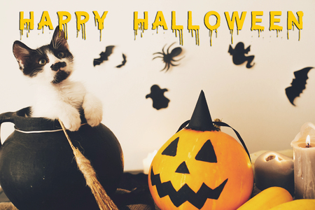 Happy Halloween text concept. Seasons greeting, spooky Halloween sign. Cute kitty   in witch cauldron with Jack o lantern, pumpkin,candles, broom and bats, ghosts on background