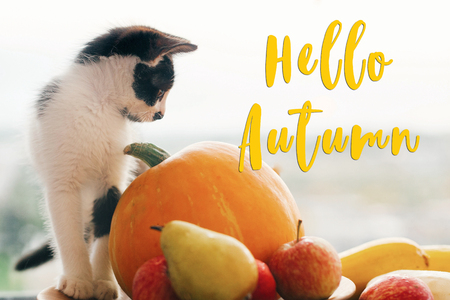 Hello Autumn text, seasons greeting card concept. Welcome Fall sign.Cute kitty and  Pumpkin, zucchini, apples, pears on white wooden table in light. Cat and Fall Harvest Stock Photo
