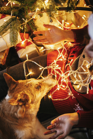 girl sitting with cute dog under golden beautiful christmas tree with lights and presents in festive room. winter atmospheric  moments. happy holidays