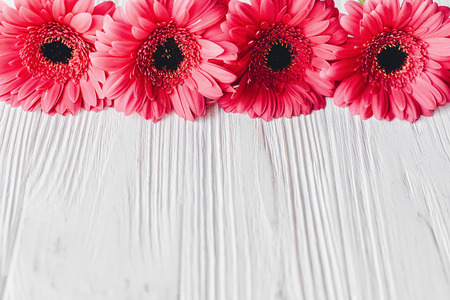 Pink gerbera on white wooden background, space for text. Floral greeting card mockup. Wedding invitation, happy mother day. Stylish border of tender pink flowers. Hello spring