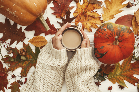 Autumn Flat Lay. Hands in sweater holding coffee cup and pumpkins, fall leaves, berries,nuts,acorns on rustic white background top view. Seasons greetings. Cozy image
