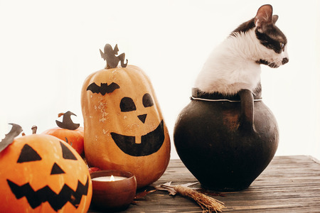 Happy Halloween concept. Pumpkins, jack-o-lantern, cat sitting in witch cauldron, bats, spider, candle, autumn leaves on black wood in light. Space for text. Seasons greeting Stock Photo