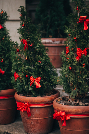 Stylish christmas decorations, green christmas trees with red bows and ornaments in european city street. Festive creative decor in city center, winter holidays. Christmas trees in pots