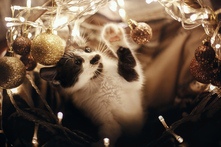 Cute kitty playing with glitter baubles in basket with lights under christmas tree in festive room. Merry Christmas concept. Adorable funny kitten with amazing eyes. Atmospheric image