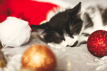 Cute kitty sleeping in santa hat on bed with gold and red christmas baubles in festive room. Merry Christmas concept. Adorable kitten napping. Atmospheric image. Seasons greetings Stock Photo