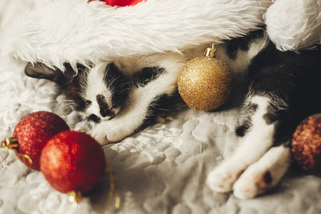 Cute kitty sleeping in santa hat on bed with gold and red christmas ornaments in festive room. Merry Christmas concept. Adorable funny kitten napping. Atmospheric image