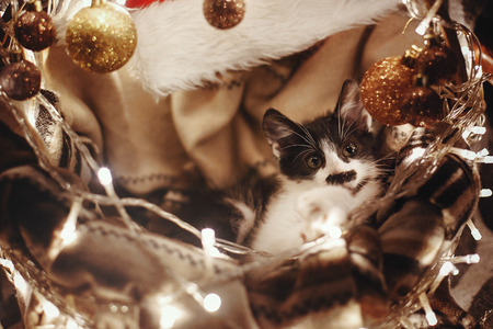 Cute kitty sitting in basket with garland lights under christmas tree in rustic room. Adorable funny kitten with amazing eyes. Merry Christmas concept. Atmospheric image, brown tone