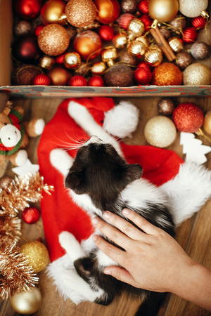 Hand caressing cute kitty at box with red and gold baubles, ornaments and santa hat under christmas tree in festive room. Merry Christmas concept. Adorable funny kitten sleeping Banco de Imagens