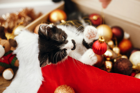 Cute kitty playing with red and gold baubles in box, ornaments and santa hat under christmas tree in festive room. Merry Christmas concept. Adorable funny kitten. Atmospheric image