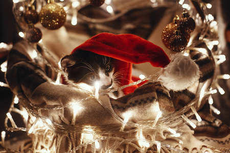 Cute kitty in santa hat sitting in basket with lights and ornaments under christmas tree in festive room. Merry Christmas concept. Adorable funny kitten with amazing eyes. Atmospheric image