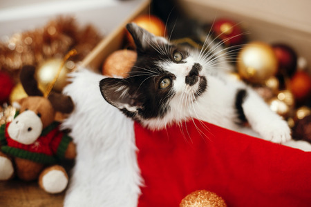Cute kitty sitting in box with red and gold baubles, ornaments and santa hat under christmas tree in festive room. Merry Christmas concept. Adorable funny kitten witn green eyes Stock Photo