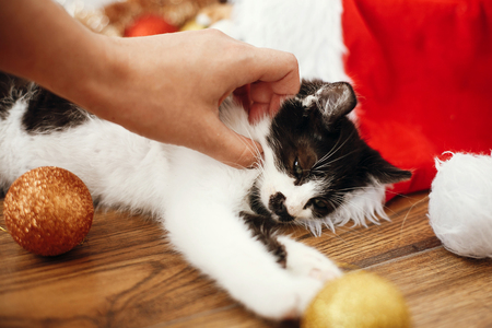 Hand caressing cute kitty at box with red and gold baubles, ornaments and santa hat under christmas tree in festive room. Merry Christmas concept. Adorable funny kitten sleeping Stok Fotoğraf