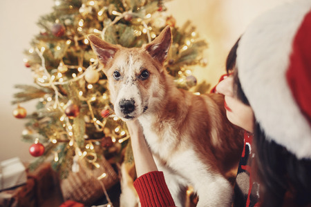 happy girl in santa hat hugging with cute dog on background of golden beautiful christmas tree with lights in festive room. family warm atmospheric moments. winter  holidays Stock fotó