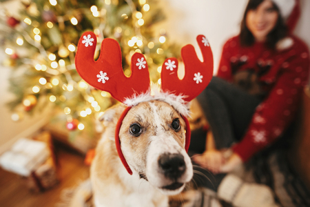 happy girl with cute dog in reindeer antlers on background of golden beautiful christmas tree with lights in festive room. doggy with adorable eyes at glowing illumination. family winter holidays