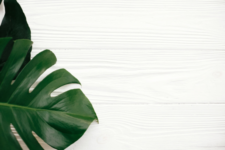Monstera leaves flat lay. Stylish green monstera leaves on white wooden background top view with space for text. Hello summer. Zero waste and eco friendly concept. Spa and wellness